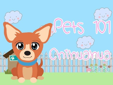 Pets 101 | Episode 1 |  Chihuahua