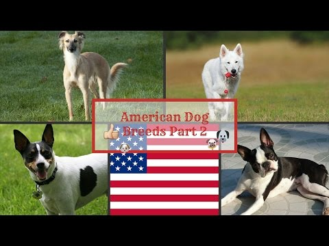 American Dog Breeds Part 2