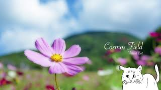 【VCDR-0028】Virtual Cat / Cosmos Field