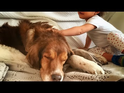 My dog recovers from cancer surgery surrounded by love