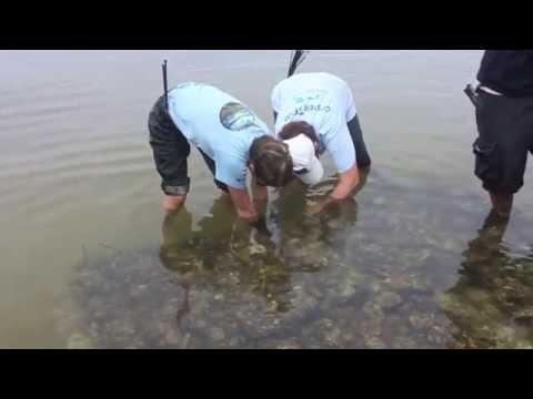 Oyster Gardening Reef Building