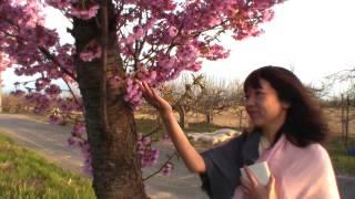 茜沢ユメル - Stay~さくらの花のように