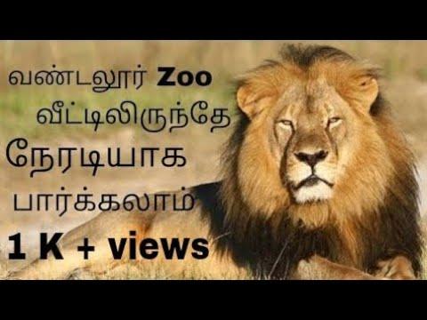 Live streaming in vandalur zoo \ tamil \ Arun Krishnamoorthy