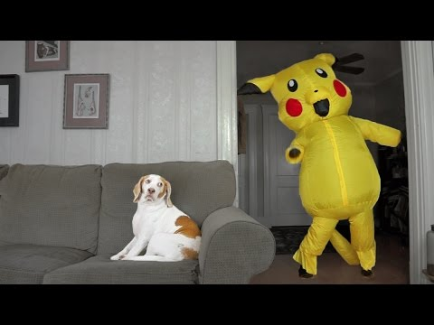 Dog Surprised by Dancing Pokemon: Cute Dog Maymo