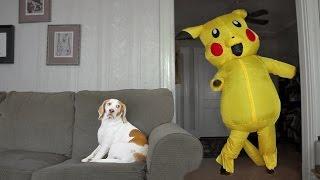 Dog Surprised by Dancing Pokemon: Cute Dog Maymo