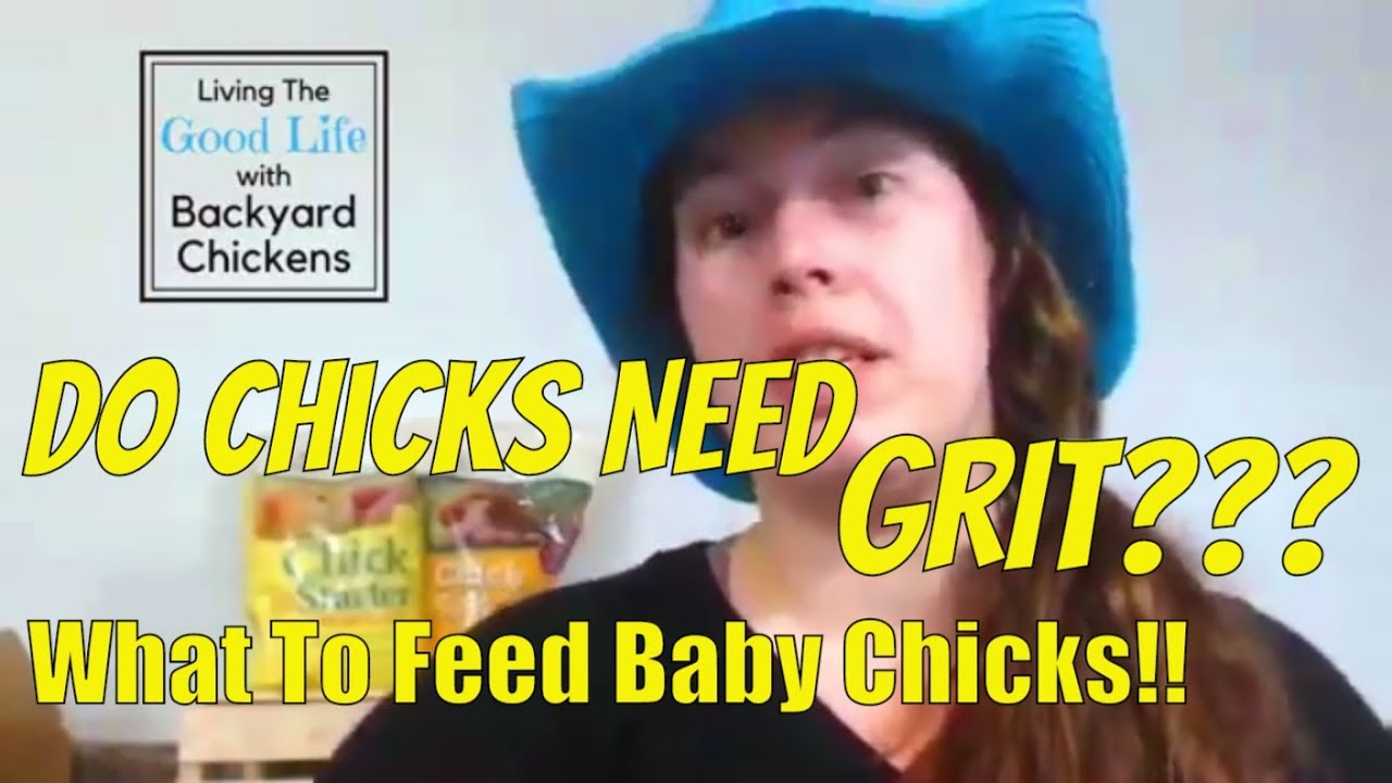 What To Feed Your Chicks Do Chicks Need Grit Youtube
