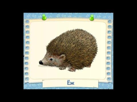 Изучаем животных. Познавательный ролик для детей. Обучающее видео