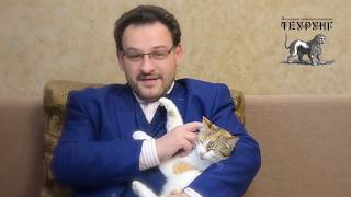 Юнгианские Чтения. Кошка, сказка об освобождении феминности. Александр Стогний