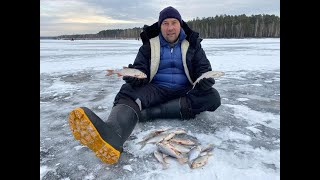Трудовая рыбалка на Белоярке в первый день зимы 01 12 2019