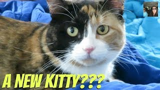 Cats Cats & More Cats Kittens Too Vlog   PaulAndShannonsLife