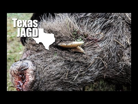 Hog Hunting The Texas Hill Country