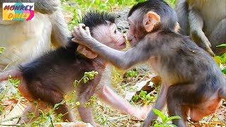 Sweet newborn Jayden kiss with Janna baby   Babies good communication each other   Monkey Daily 4957