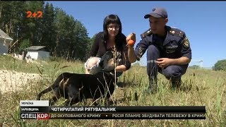 Такса-рятувальниця, з Харківщини, єдиний пес в Україні, що має такий фах