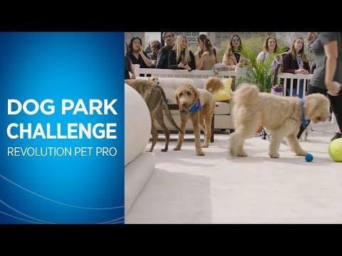 BISSELL Commercial: Dog Park Challenge Short