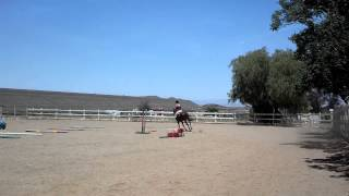Blazing Away ~ Trot poles & Cantering