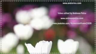 ♡ André Rieu - Romance Anonyme