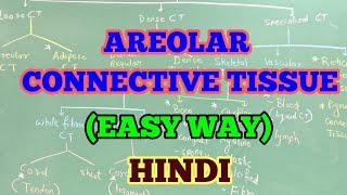 AREOLAR CONNECTIVE TISSUE (HINDI) / EASY WAY