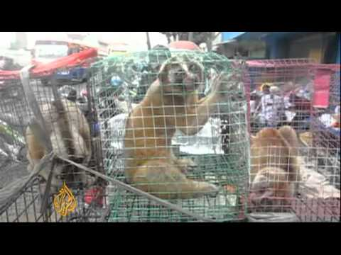 Animal trafficking in Indonesia