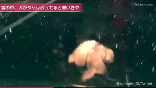 雪の降る晩、水戸の街で車を走らせていた撮影者さん。ふと見ると、路上...