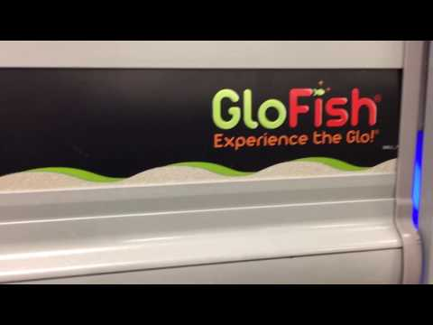 Glofish at Petsmart