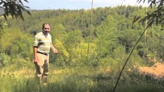 Bambuver - Desarrollo integral del bambú - Huatusco Mexico