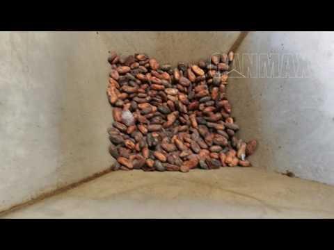 Cocoa bean screw oil press machine