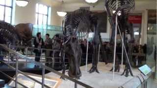 видео Американский музей естественной истории