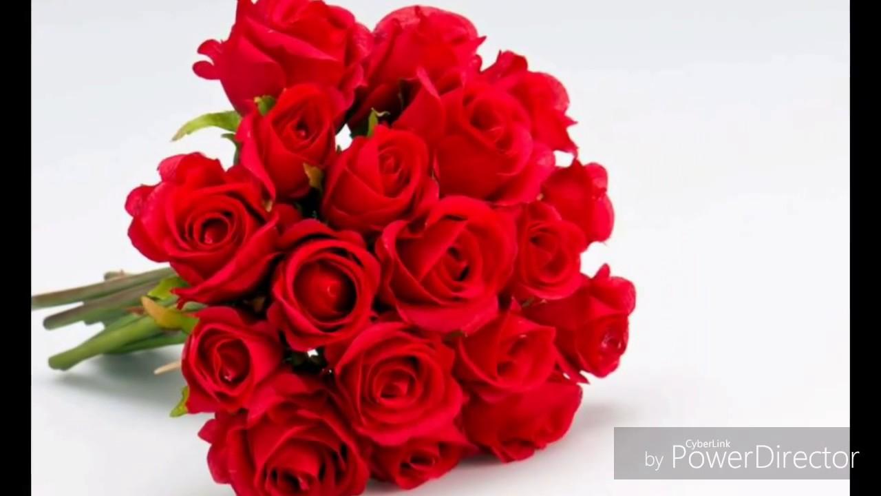 Las rosas mas hermosas youtube - Rosas rosas hermosas ...