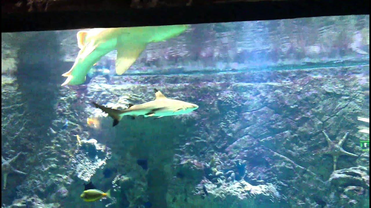 часть мегагринн москва фото аквариум воплотил эти мечты