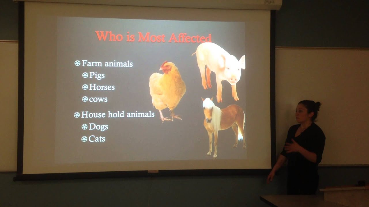 persuasive speech animal cruelty coms