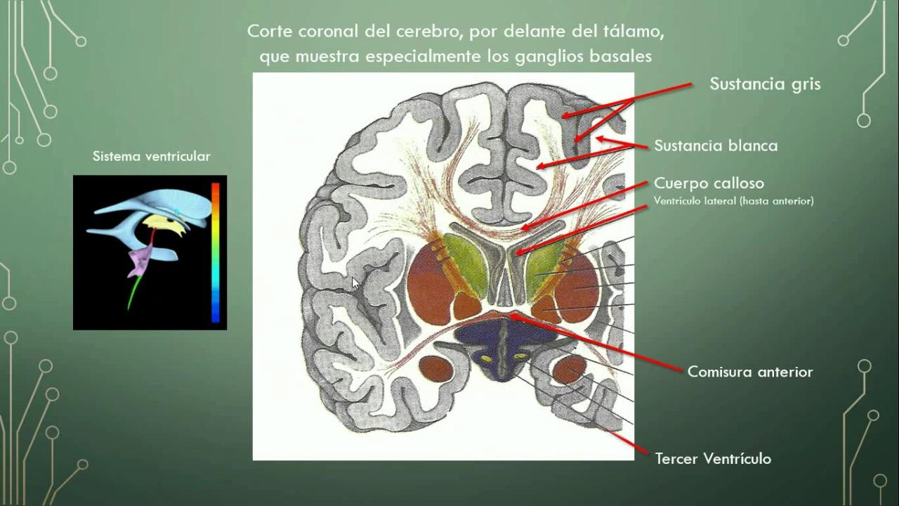 Neurofisiologia @FacultadPsi_UNC: Anatomía del encéfalo; por ANA ...