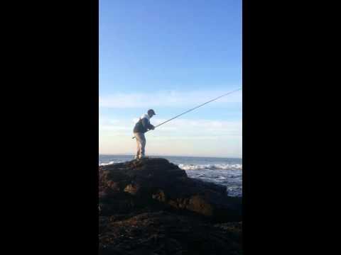 Pesca de sargo en Punta colorada