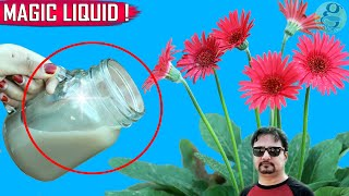 SECRET LIQUID FERTILIZER | See What Happens When You Use This Organic Fertilizer