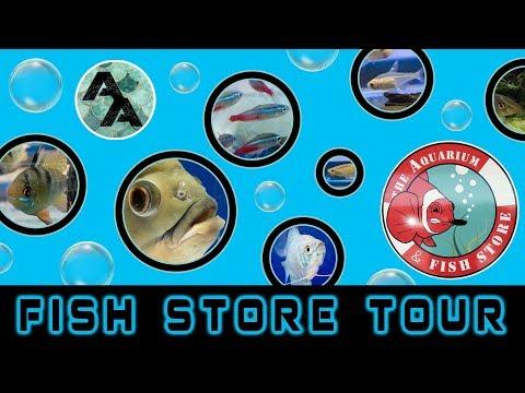 Local Fish Store Tour. The Aquarium And Fish Store   Brandon Florida