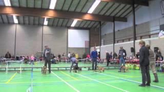 Dutch Border Terrier Club Show 2012