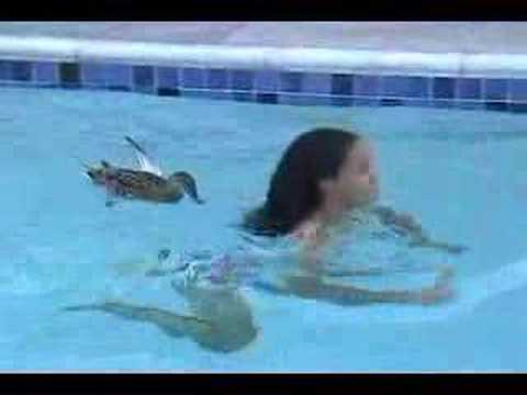When ducks go bad pesky pool duck youtube for Keep ducks out of swimming pool