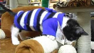 Одежда для кошек . Все О Домашних Животных.