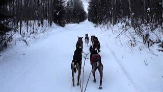 Training Sled Dogs For Elfstone Kennel, Llc. | Mushing | Dog Sledding