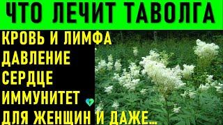 Уникальная трава Таволга: Лечебные свойства для сердца, крови и лимфы, женщин и ...