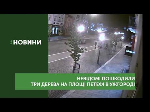 Невідомі пошкодили три дерева на площі Петефі в Ужгороді