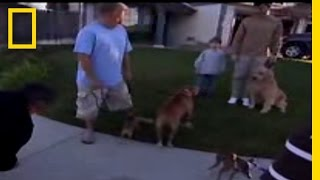 Dog Whisperer: Calm Down!