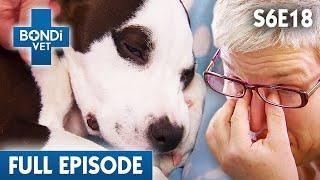 there-s-something-growing-in-this-dog-s-eye-s06e18-bondi-vet