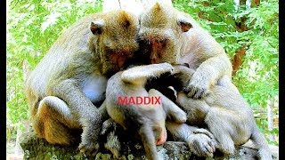 Maddix nearly gets Polino's belonging milk after trying hard with mom Maria, thumbnail