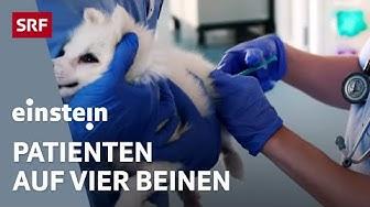 Alles für unsere Haustiere – eine Woche im renommierten Tierspital | SRF Einstein
