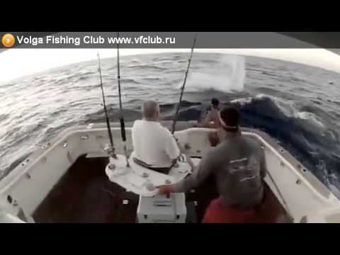 Рыба выгнала рыбака из лодки