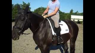 How do I keep my lower legs connected? Do your heels come up in the trot walk transitions #4