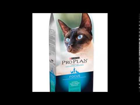 best-cat-food-urinary-tract-infection