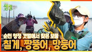[2TV 생생정보] 순천 청정 갯벌에서 찾은 보물! 칠게·짱뚱어·망둥이~ (ft.갯벌 머드팩) | KBS 2…