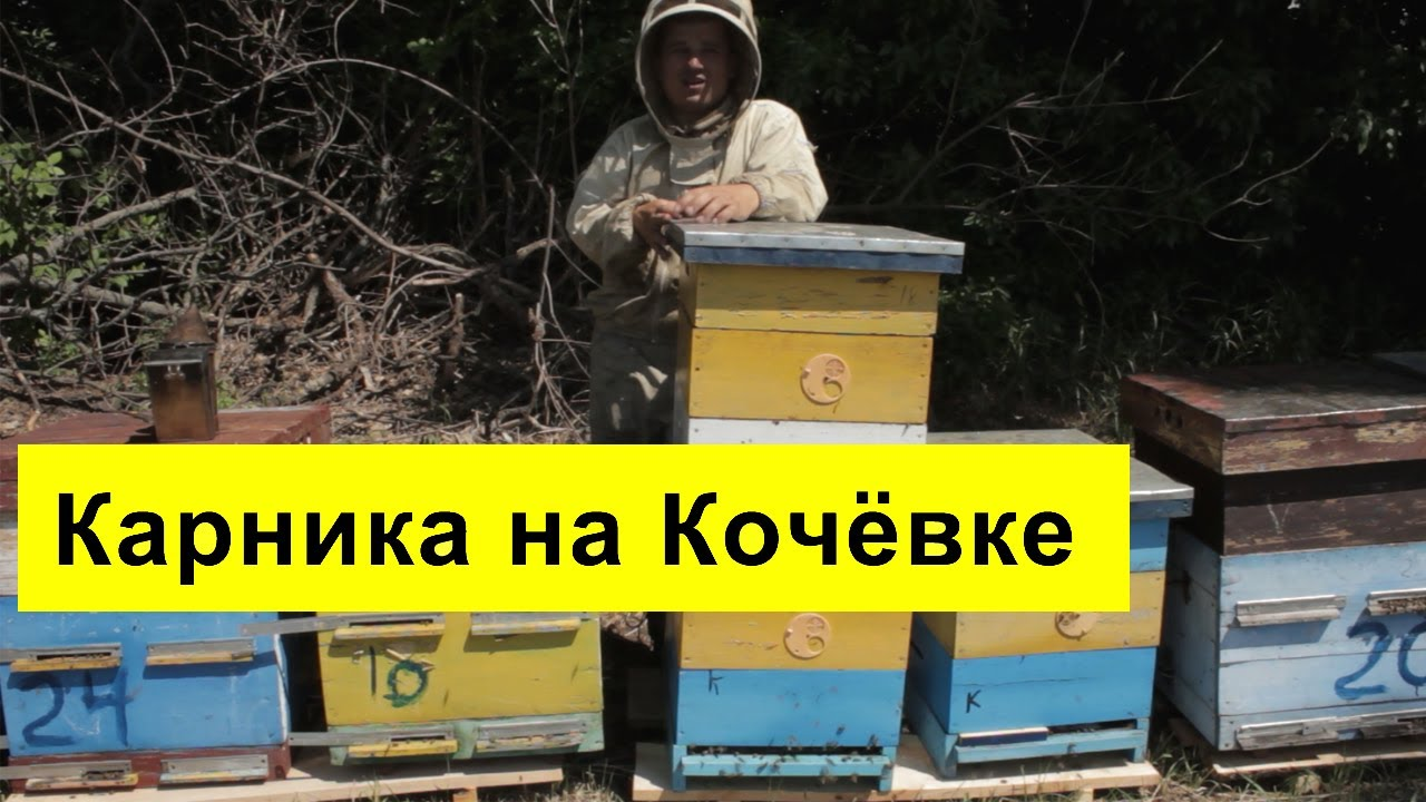 МАТКИ КАРНИКА ОТ ТАРАСОВА Uterine Karnik FROM TARASOVA - YouTube