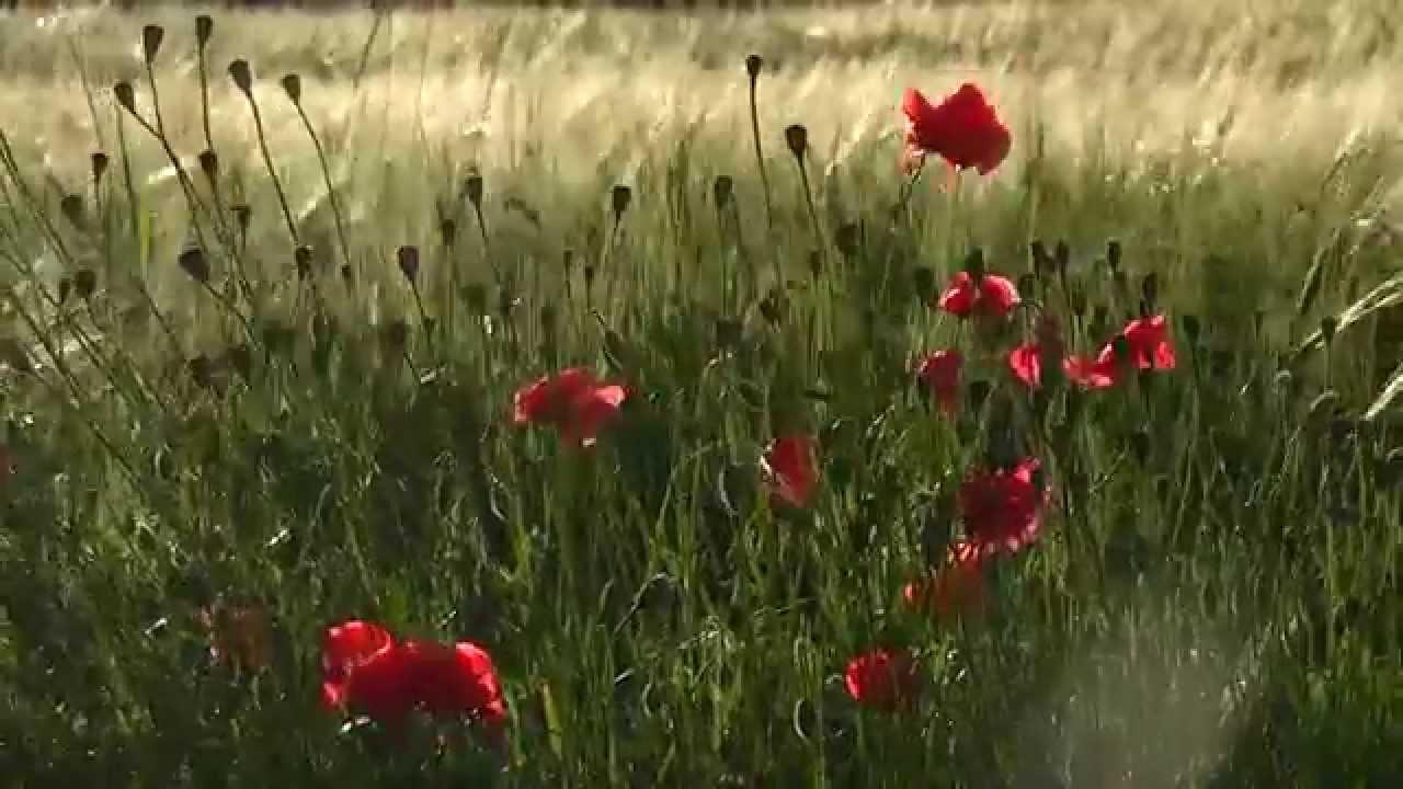 цветы в поле фото